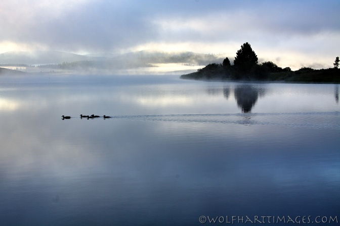 Steamboat Lake in the fog with ducks