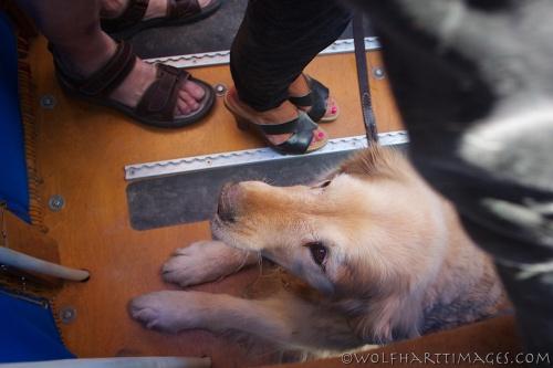 dog passenger