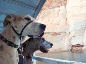 Boat into Antelope Canyon, Great Danes, have Danes will travel