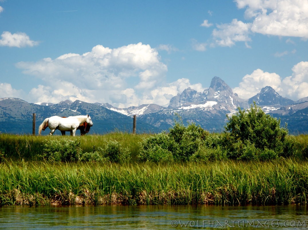 View from the Teton River