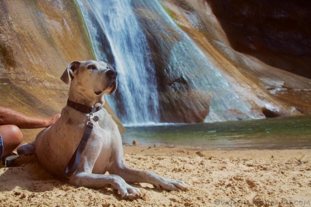Calf Creek Falls 03
