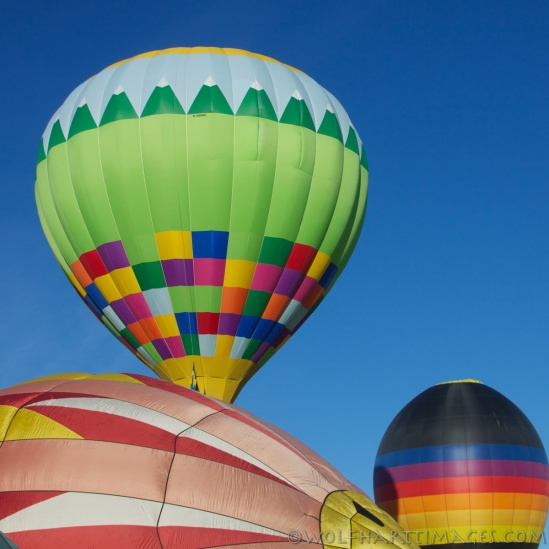 Eyes to the sky, balloon festival