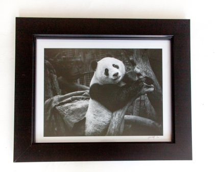 Photo lustre print, un-matted, 11x14 finished size 14x17